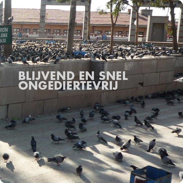duiven_dak